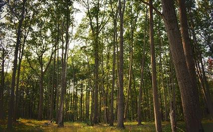 Plum Creek's Moosehead Region Conservation Easement